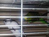 Ctn muhabbet kuş üretimi ve evcil hayvan malzemeleri